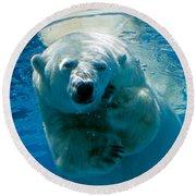 Polar Bear Contemplating Dinner Round Beach Towel by John Haldane