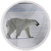 Polar Bear On Steel Round Beach Towel