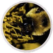 Round Beach Towel featuring the photograph Pollen Collector 2 by Jay Stockhaus