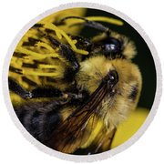 Round Beach Towel featuring the photograph Pollen Collector  by Jay Stockhaus