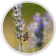 Round Beach Towel featuring the photograph Pollinating by Rod Best
