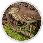 Pond Heron With Fish  Round Beach Towel