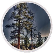 Ponderosa Pines At The Bonito Lava Flow Round Beach Towel