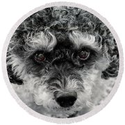 Poodle Eyes Round Beach Towel
