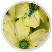 Round Beach Towel featuring the photograph Pop Macro No. 2 by Laura Melis