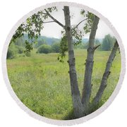 Poplar Tree In Meadow Round Beach Towel