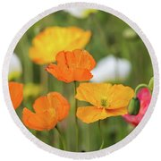Round Beach Towel featuring the photograph  Poppies 1 by Werner Padarin