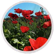 Poppies. Round Beach Towel by Don Pedro De Gracia