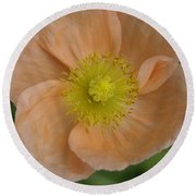 Round Beach Towel featuring the photograph Poppy by Heidi Poulin