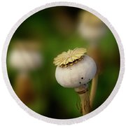 Round Beach Towel featuring the photograph Poppy Seed Pod - 365-147 by Inge Riis McDonald