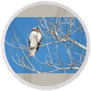 portract of Hawk Round Beach Towel
