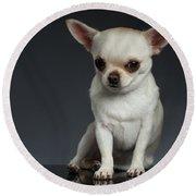 Portrait Little Chihuahua Dog Sitting On Dark Backgroun Round Beach Towel by Sergey Taran