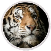 Portrait Of A Bengal Tiger Round Beach Towel