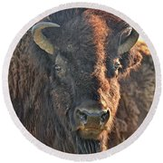 Portrait Of A Buffalo Round Beach Towel by Nancy Landry
