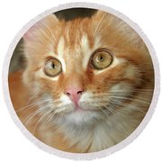 Portrait Of A Cat Round Beach Towel