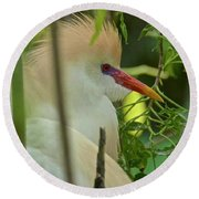 Portrait Of A Cattle Egret Round Beach Towel