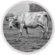 Portrait Of A Cow Round Beach Towel
