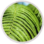 Round Beach Towel featuring the photograph Portrait Of A Fern by T Brian Jones