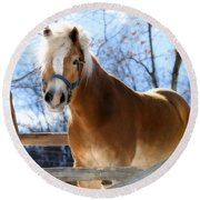 Portrait Of A Haflinger - Niko In Winter Round Beach Towel