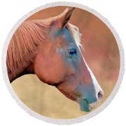 Portrait Of A Horse Round Beach Towel by Marion Johnson