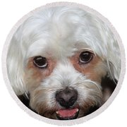 Portrait Of A Lahsa Round Beach Towel