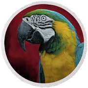 Round Beach Towel featuring the photograph Portrait Of A Parrot by Jeff Burgess