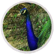 Round Beach Towel featuring the photograph Portrait Of A Peacock by Jessica Brawley