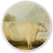 Portrait Of A Prize Cow Round Beach Towel by John Vine