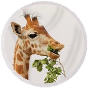 Round Beach Towel featuring the photograph Portrait Of A Rothschild Giraffe IIi by Nick Biemans