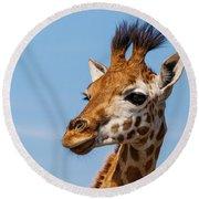 Portrait Of A Rothschild Giraffe  Round Beach Towel