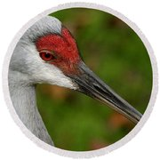 Portrait Of A Sandhill Crane Round Beach Towel