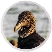 Portrait Of A Vulture Round Beach Towel