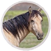 Portrait Of A Wild Horse Round Beach Towel
