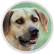 Portrait Of A Yellow Labrador Retriever Round Beach Towel