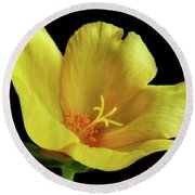 Round Beach Towel featuring the photograph Portrait Of A Yellow Purslane Flower by David and Carol Kelly