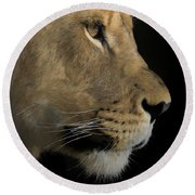 Round Beach Towel featuring the digital art Portrait Of A Young Lion by Ernie Echols
