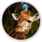 Portrait Of A Young Rothschild Giraffe  Round Beach Towel
