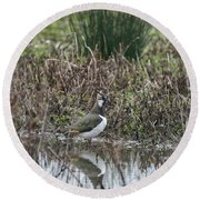 Portrait Of Beautiful Lapwing Bird Seen Through Reeds On Side Of Round Beach Towel