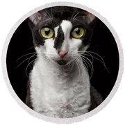 Portrait Of Cornish Rex Looking In Camera Isolated On Black  Round Beach Towel by Sergey Taran