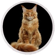 Portrait Of Ginger Maine Coon Cat Isolated On Black Background Round Beach Towel