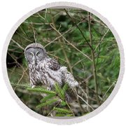 Portrait Of Gray Owl Round Beach Towel