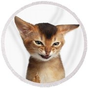 Portrait Of Kitten With Showing Middle Finger Round Beach Towel