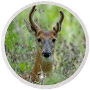 Portriat Of Male Deer Round Beach Towel