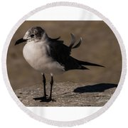Posing Laughing Gull Round Beach Towel