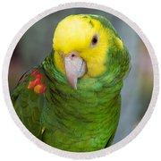 Posing Parrot Round Beach Towel