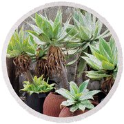 Potted Agave Plants Round Beach Towel