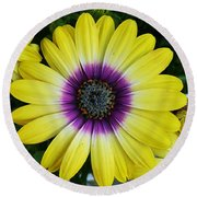 Round Beach Towel featuring the photograph Powerful Flower by Jasna Gopic