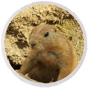 Round Beach Towel featuring the photograph Prairie Dog Peek by Robin Regan