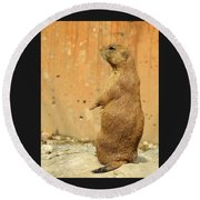 Prairie Dog Profile Round Beach Towel