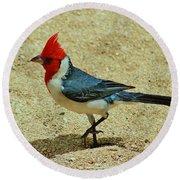 Prancing Brazil Cardinal Round Beach Towel